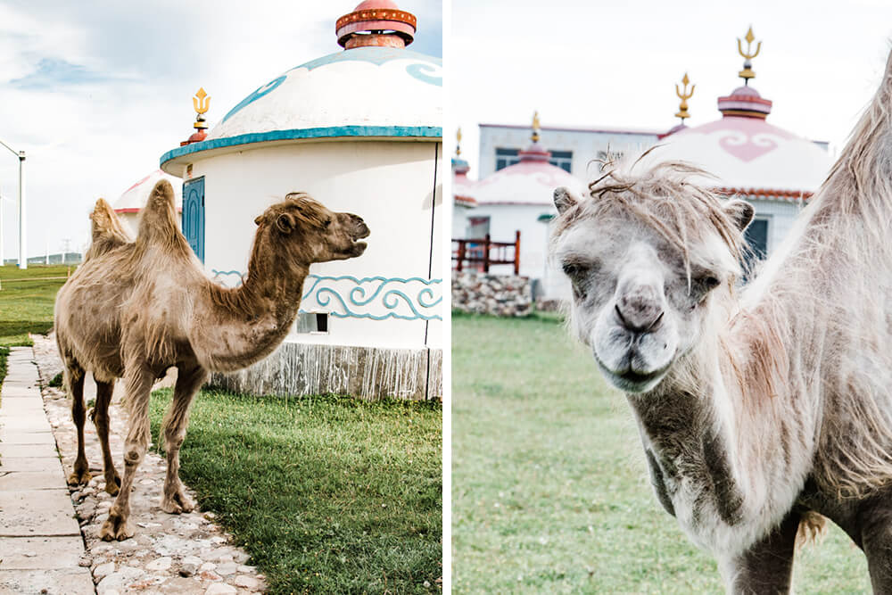 travel images for Shilpa Iyer Photography traveling through Inner Mongolia
